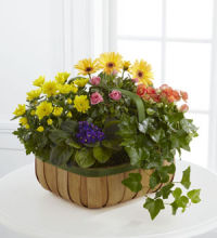 Plant: French Garden: Gentle Blossom Basket