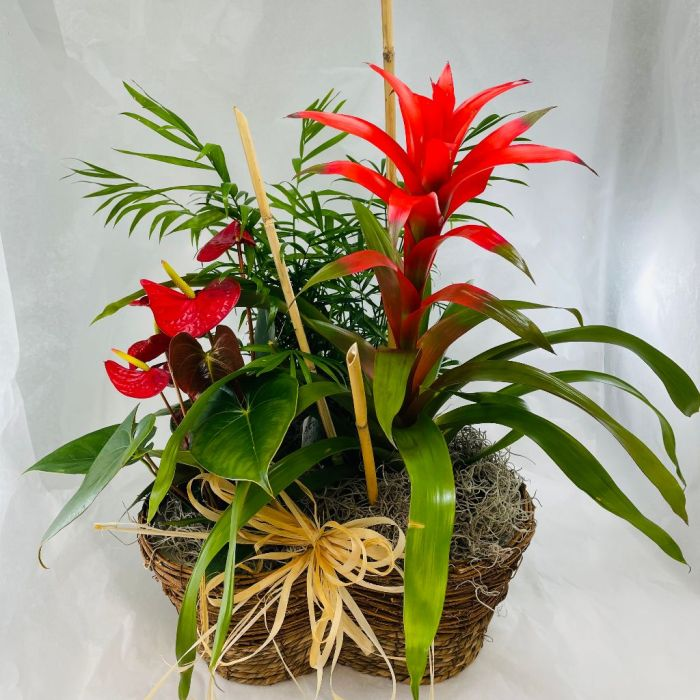 Plant: Tropical Mix in Garden Basket