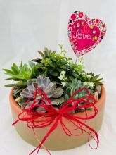 Plant: Garden of Love: Succulents