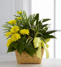 Planter: Loving Light Planter basket, yellow accents